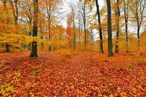 Bos-herfst-wandelingen-La-Roche-vakantiehuis-Ardennen